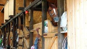 Ένα καλά-καλλωπισμένο άλογο παίζει παιχνιδιάρικα στους σταύλους απόθεμα βίντεο