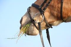 Ένα καφετί άλογο Στοκ φωτογραφία με δικαίωμα ελεύθερης χρήσης