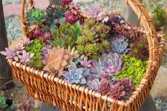 Ένα καλάθι των λουλουδιών Στοκ εικόνα με δικαίωμα ελεύθερης χρήσης