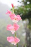 Ένα καλό λουλούδι. Στοκ εικόνα με δικαίωμα ελεύθερης χρήσης