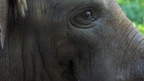 Ένα κεφάλι ελεφάντων ` s γυρίζει αργά κατά μέρος σε έναν ζωολογικό κήπο το καλοκαίρι απόθεμα βίντεο