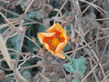 Ένα κιτρινωπό πορτοκαλί λουλούδι Στοκ φωτογραφία με δικαίωμα ελεύθερης χρήσης