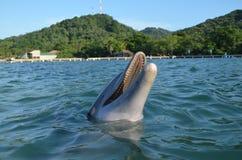 Ένα κοινό δελφίνι Bottlenose που κολυμπά στον ωκεανό Στοκ εικόνα με δικαίωμα ελεύθερης χρήσης