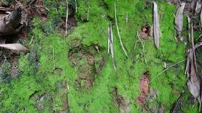 Ένα κομμάτι του βρύο-φορτωμένου χώματος στοκ εικόνα με δικαίωμα ελεύθερης χρήσης