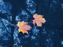 Ένα κομμάτι του φθινοπώρου Στοκ Εικόνα