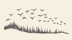 Ένα κοπάδι συρμένης της πουλιά διανυσματικής απεικόνισης, σκίτσο Στοκ εικόνα με δικαίωμα ελεύθερης χρήσης