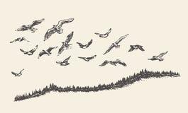 Ένα κοπάδι συρμένης της πουλιά διανυσματικής απεικόνισης, σκίτσο Στοκ Εικόνες