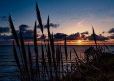 Ένα κοπάδι της μύγας χήνων μέσω του ηλιοβασιλέματος πέρα από το Τρινιδάδ, Καλιφόρνια στοκ εικόνα