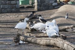 Ένα κοπάδι των άγριων πουλιών στοκ φωτογραφία με δικαίωμα ελεύθερης χρήσης