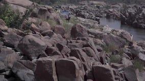 Ένα κοπάδι των αιγών κοντά στον ποταμό απόθεμα βίντεο