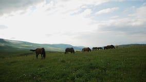 Ένα κοπάδι των αλόγων βόσκει στα βουνά φιλμ μικρού μήκους