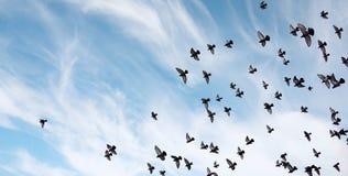 Ένα κοπάδι των περιστεριών πετά πέρα από τον ουρανό Μύγα πουλιών ενάντια στο s Στοκ Φωτογραφίες