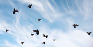 Ένα κοπάδι των περιστεριών πετά πέρα από τον ουρανό Μύγα πουλιών ενάντια στο s Στοκ εικόνα με δικαίωμα ελεύθερης χρήσης
