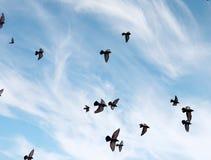 Ένα κοπάδι των περιστεριών πετά πέρα από τον ουρανό Μύγα πουλιών ενάντια στο s Στοκ εικόνες με δικαίωμα ελεύθερης χρήσης