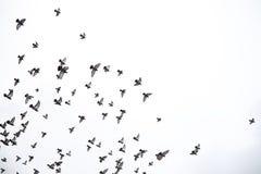 Ένα κοπάδι των περιστεριών πετά πέρα από τον ουρανό Μύγα πουλιών ενάντια στο s Στοκ φωτογραφίες με δικαίωμα ελεύθερης χρήσης