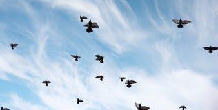 Ένα κοπάδι των περιστεριών πετά πέρα από τον ουρανό Μύγα πουλιών ενάντια στο s Στοκ φωτογραφία με δικαίωμα ελεύθερης χρήσης