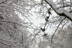 Ένα κοπάδι των περιστεριών το χειμώνα στοκ φωτογραφίες