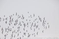 Ένα κοπάδι των πουλιών στην παραλία στην ομίχλη στοκ φωτογραφία με δικαίωμα ελεύθερης χρήσης