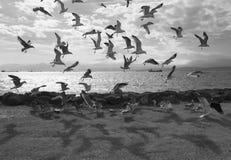 Ένα κοπάδι seagulls Στοκ εικόνες με δικαίωμα ελεύθερης χρήσης
