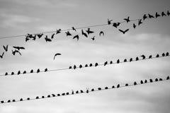 Ένα κοπάδι απογειώνεται Στοκ Φωτογραφίες