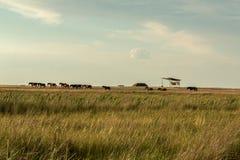 Ένα κοπάδι των άγριων αλόγων Στοκ φωτογραφίες με δικαίωμα ελεύθερης χρήσης
