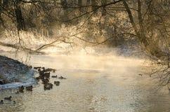 Ένα κοπάδι των παπιών στα misty νερά στην αυγή Στοκ φωτογραφία με δικαίωμα ελεύθερης χρήσης