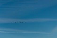 Ένα κοπάδι των πουλιών που πετούν στο μπλε ουρανό Στοκ Εικόνα