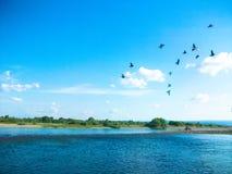 Ένα κοπάδι των πουλιών στον ουρανό Στοκ φωτογραφίες με δικαίωμα ελεύθερης χρήσης