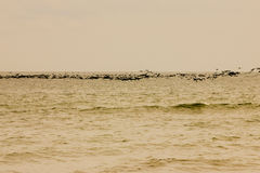 Ένα κοπάδι των πουλιών Στοκ Φωτογραφίες