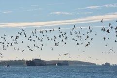 Ένα κοπάδι seagulls πέρα από τον ποταμό φορά Στοκ φωτογραφία με δικαίωμα ελεύθερης χρήσης