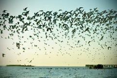 Πετώντας Seagulls Στοκ εικόνα με δικαίωμα ελεύθερης χρήσης