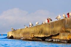 Ένα κοπάδι seagulls στον κυματοθραύστη Στοκ Εικόνα