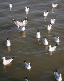 Ένα κοπάδι seagulls Στοκ εικόνα με δικαίωμα ελεύθερης χρήσης