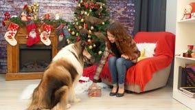Ένα κορίτσι με Χριστούγεννα εορτασμού σκυλιών απόθεμα βίντεο