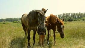 Ένα κορίτσι μπαίνει μέσα έναν τομέα με ένα άλογο απόθεμα βίντεο