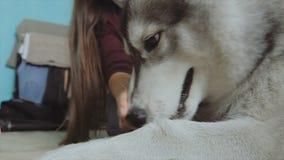 Ένα κορίτσι παίζει με ένα σκυλί απόθεμα βίντεο