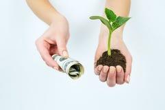 Ένα κορίτσι που κρατά ένα σπορόφυτο με τη γη και τα αμερικανικά χρήματα Στοκ Εικόνες