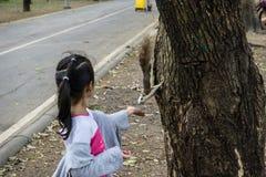 Ένα κορίτσι που ταΐζει έναν σκίουρο Στοκ εικόνα με δικαίωμα ελεύθερης χρήσης