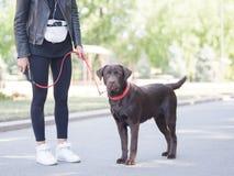 Ένα κορίτσι στέκεται στα ακουστικά με ένα σκυλί σε ένα λουρί στοκ εικόνες
