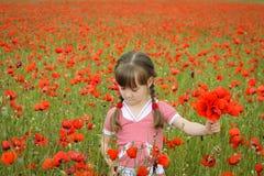 Ένα κορίτσι συλλέγει τα λουλούδια παπαρουνών Στοκ εικόνες με δικαίωμα ελεύθερης χρήσης