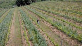 Ένα κορίτσι τουριστών ή ένας αγρότης περνά από τον αμπελώνα Εναέριο πλαίσιο των Tuscan λόφων απόθεμα βίντεο