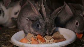 Ένα κουνέλι τρώει το καρότο που μοιράζεται από τον άνθρωπο φιλμ μικρού μήκους