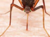 Ένα κουνούπι στοκ φωτογραφία με δικαίωμα ελεύθερης χρήσης