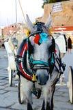 Ένα κουρασμένο άλογο Στοκ φωτογραφία με δικαίωμα ελεύθερης χρήσης
