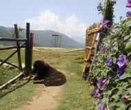 Ένα κουτάβι στα βουνά του Νεπάλ Στοκ φωτογραφία με δικαίωμα ελεύθερης χρήσης