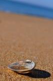 ένα κοχύλι Στοκ φωτογραφία με δικαίωμα ελεύθερης χρήσης