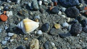 Ένα κοχύλι στην ακτή 2 Στοκ Φωτογραφίες