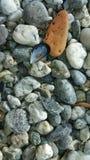 Ένα κοχύλι στην παραλία τριξιμάτων Στοκ φωτογραφία με δικαίωμα ελεύθερης χρήσης