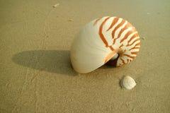 Ένα κοχύλι Nautilus στη χρυσή παραλία άμμου με ένα άλλο μικρό θαλασσινό κοχύλι Στοκ Εικόνες