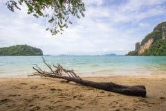 Ένα κούτσουρο που βρίσκεται στην παραλία του νησιού Phak Bia, περιοχή AO Luek, Krabi, Ταϊλάνδη Στοκ Εικόνες